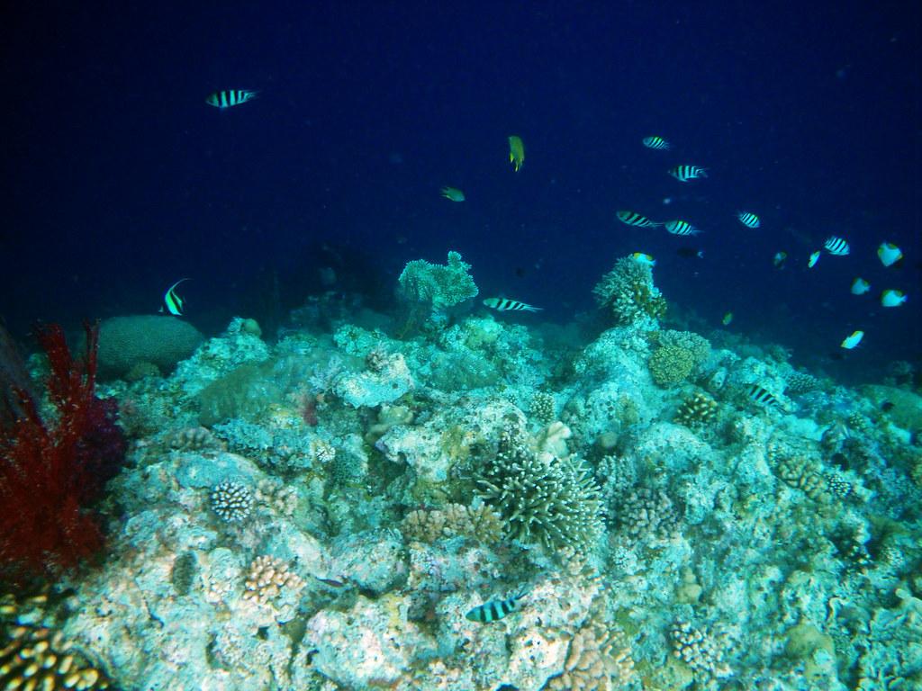 那年冬天,帛琉!