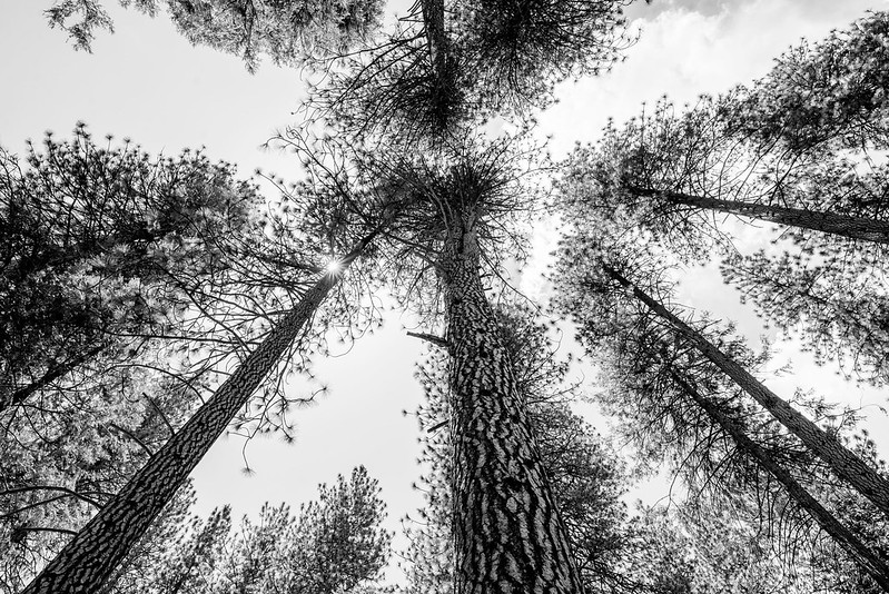 Trees at Yosemite National Park