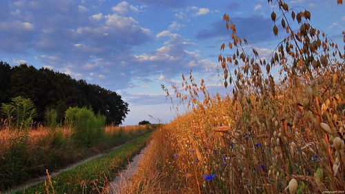 road blue trees sunset summer sky nature clouds last rural forest landscape path poland polska natura oat droga przyroda chmury niebo lato zachódsłońca drzewa owies krajobraz ścieżka wiejski buczek parkkrajobrazowywzniesieńłódzkich lodzhillslandscapepark