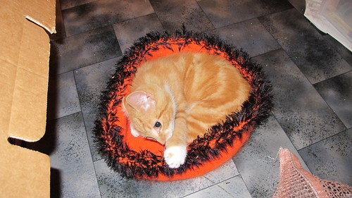 Kitty Pi #2 - Kitten Pi