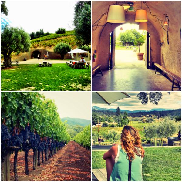 Bella Vineyards