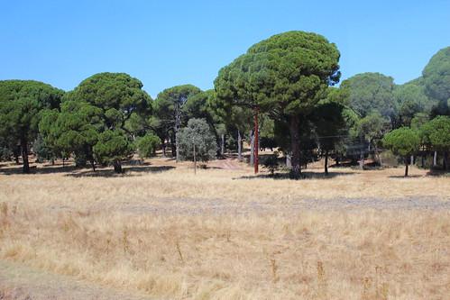 Toledo to Avila, oak forest IMG_0861