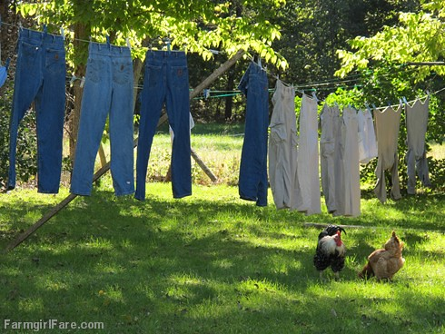 Under the laundry line (1) - FarmgirlFare.com