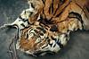 2005. Nepal, Kathmandu. Tiger skin - Mole/EIA