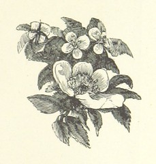 Image taken from page 33 of 'The Child's own Poetry Book. Written and arranged by H. G. G. With ... illustrations'