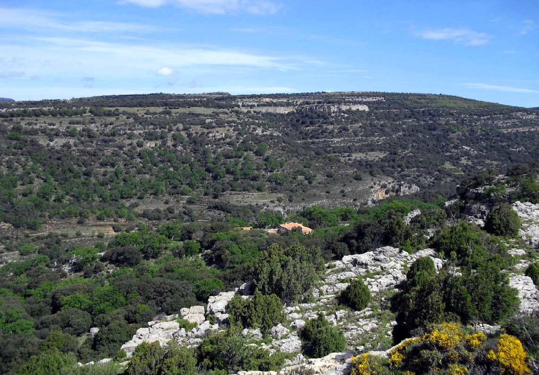 4. Detalle del barranc dels Horts. Autora, Isabel Queral