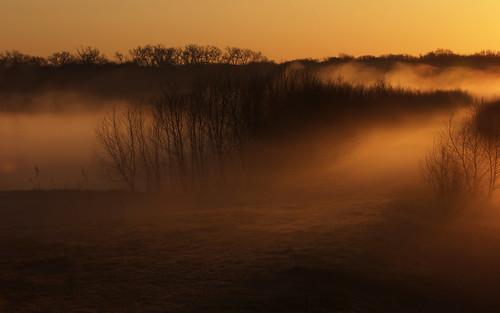 macro birds arlington canon landscape dallas nikon texas wildlife flash 14 foggy 100mm irving 16 20 ftworth fullframe 13 extender 400mm northtexas 550d 1d4 560mm t2i villagecreekdryingbeds 5d2 5dii vcdb 1dmkiv 1dmk4 randyecrispphotography randycrisp randyecrisp