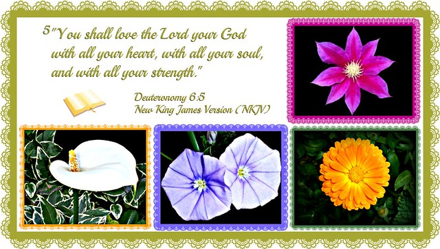 """You shall love the Lord your God with all your heart, with all your soul, and with all your strength."""