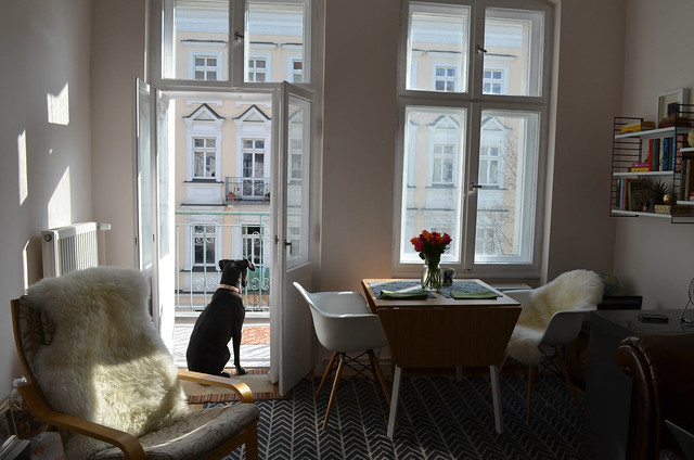 berlin apartment_living room view new eames chairs Bailey dog and balcony
