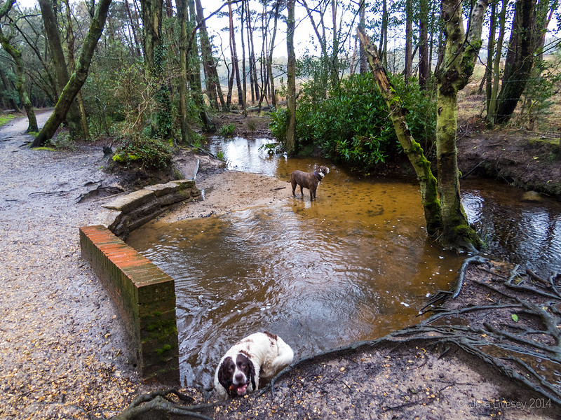 Jez and Max in the stream