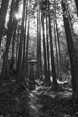 鎮守の森 (grove of the village shrine)