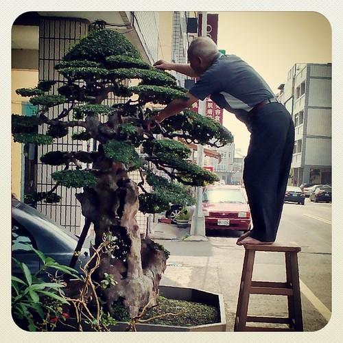Pruning. #nantou #caotun #taiwan