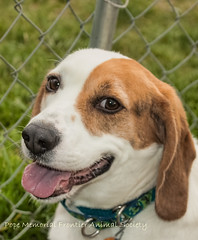 Windsor at Frontier Animal Society (May 23, 2014) 09