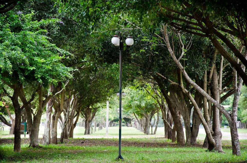 Un enorme paseo central con frondosos árboles pueden verse en la ciudad de Paso de Patria, Departamento de Ñeembucú. A pocas cuadras se encuentran la plaza y el museo histórico como atractivos turísticos. (Elton Núñez)