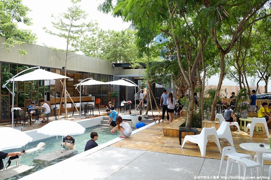 樂逗森林。夏天消暑毛小孩游泳去-台中南區【鳥夫人】