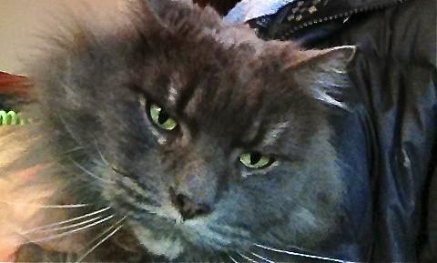 Grumpy Cat Music Videos
