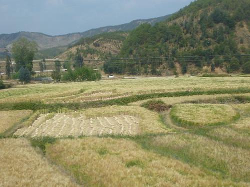 Yunnan13-Dali-Lijiang-Route (116)