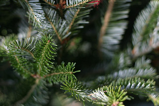 Should you use a real tree this Christmas?