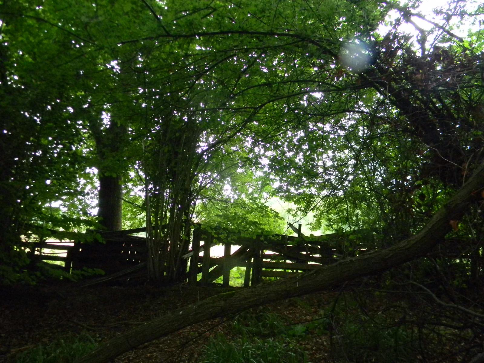 Ramshackle fence 1 Wadhurst Circular