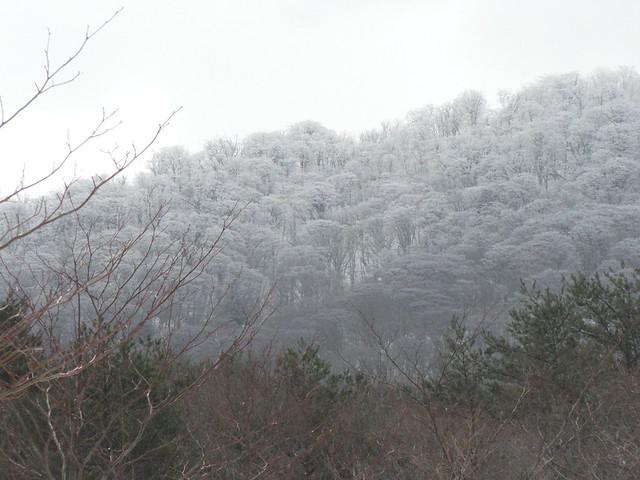 晴れ間が見え,苅尾の樹氷が姿を現した