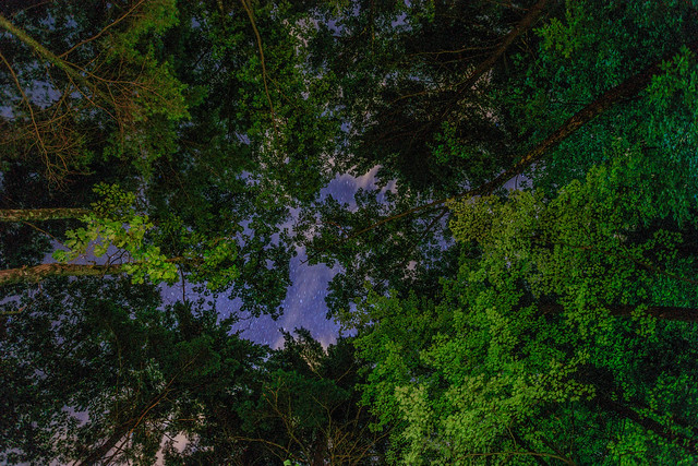 Trees Stars Sky - At Moreau Lake - Part II