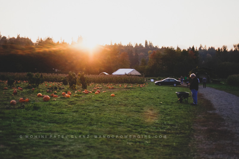 sun setting over the pumpkin patch