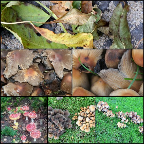 2013-10-22 paddenstoelen Collage klein by edufloortje