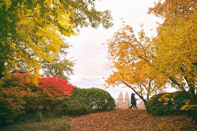 Central Park Autumn - New York City