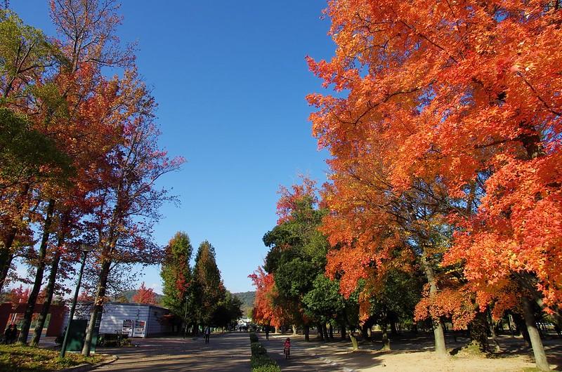 岡山県総合グラウンド #9
