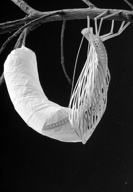 Paper Sculpture Chrysalis