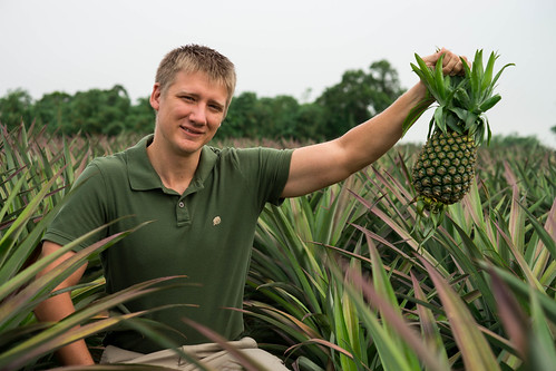 Mark Picking Pineapples
