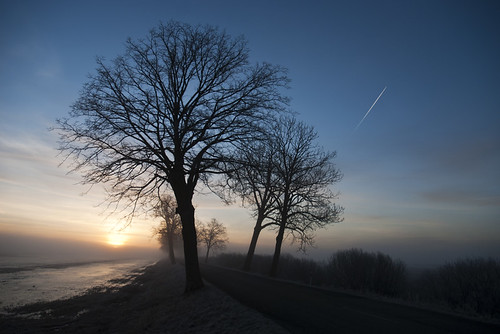 morning trees mist fog sunrise lithuania lietuva