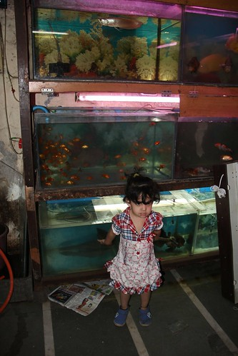 Waiting For Bloodworms At Sweet Home Aquarium Bandra ,,, Nerjis Asif Shakir by firoze shakir photographerno1