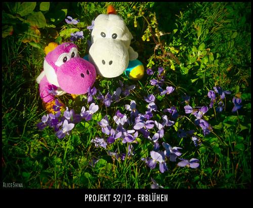 Projekt 52/12 - Erblühen