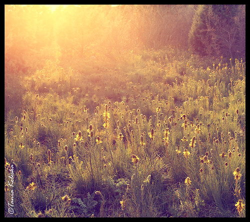 flowers sunset sun mountain mountains flower color nature colors beautiful beauty sunshine yellow canon season landscape spring colorful yellowflower greece colourful colori 6d canonef50mmf14usm kastoria yellowsky colorsky canoneos6d taniaphotography taniakoleska