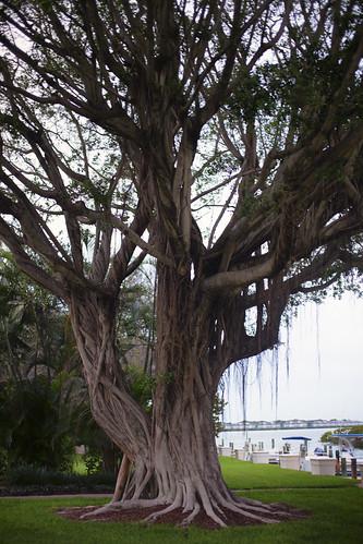 03-14 Florida-1307-Edit