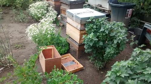 beehive July 15