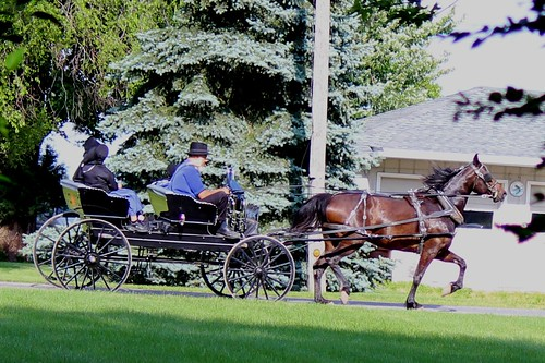 IMG_0178_Amish_Buggy
