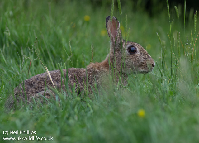 Rabbit-3