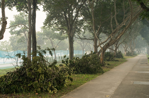 Signs of tree clearing along Bedok Reservoir Road - work still goes on for these workers, it seems.
