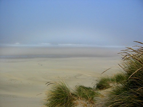 dunes, fog, ocean