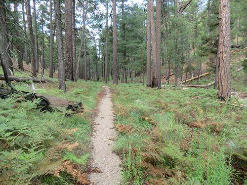 1308 Box Camp Trail