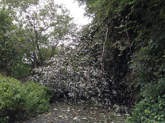 飯盛山-土砂崩れ