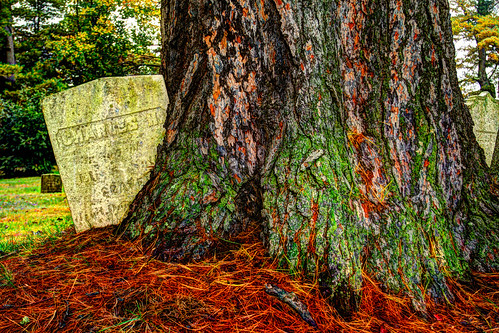 autumn tree halloween grave pine tombstone large crypt hdr