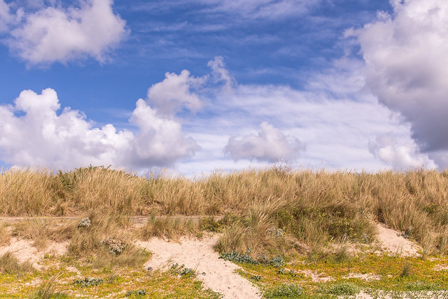 Sand dunes at St. Ouen