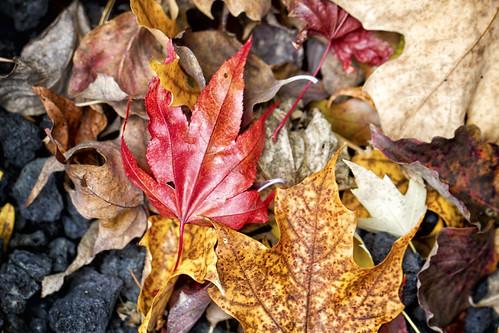 11-13 fall-9513-Edit-16