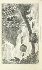 """British Library digitised image from page 104 of """"Explorations and adventures in Equatorial Africa; with accounts of the manners and customs of the people and of the chace of the gorilla, crocodile, leopard, elephant, hippopotamus and other animals. (Seco"""