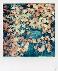 The autumn carpet