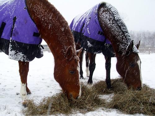 Winter_ponies