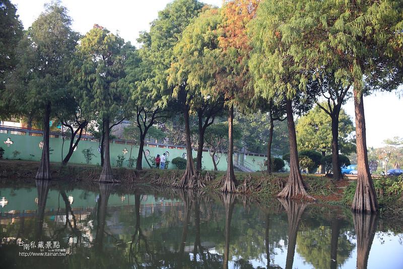 台南私藏景點--巴克禮落羽松 (11)